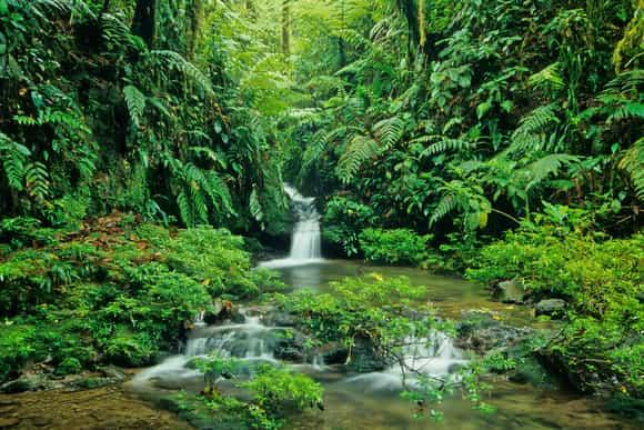 Braulio Carillo - Parc National