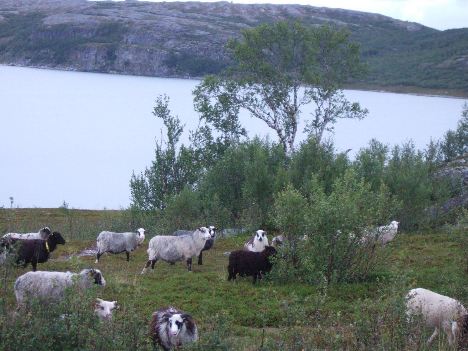 Lakselv et le fjord de Porsanger