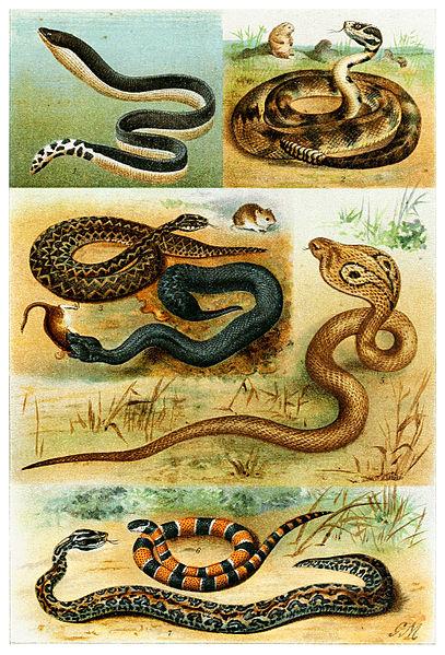 Les différentes familles de serpent