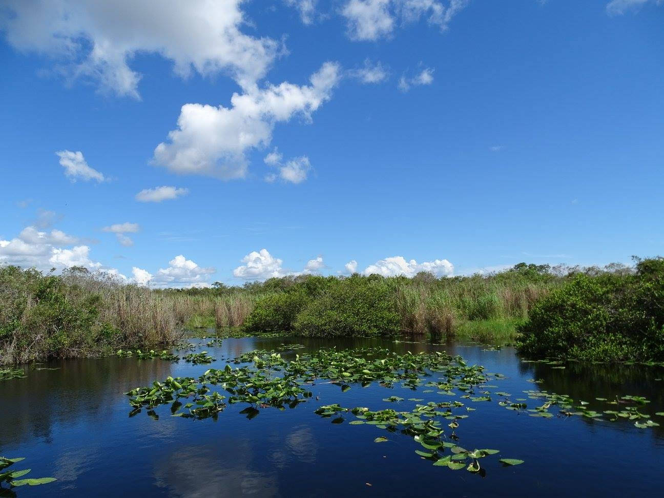 Everglades - Parc national
