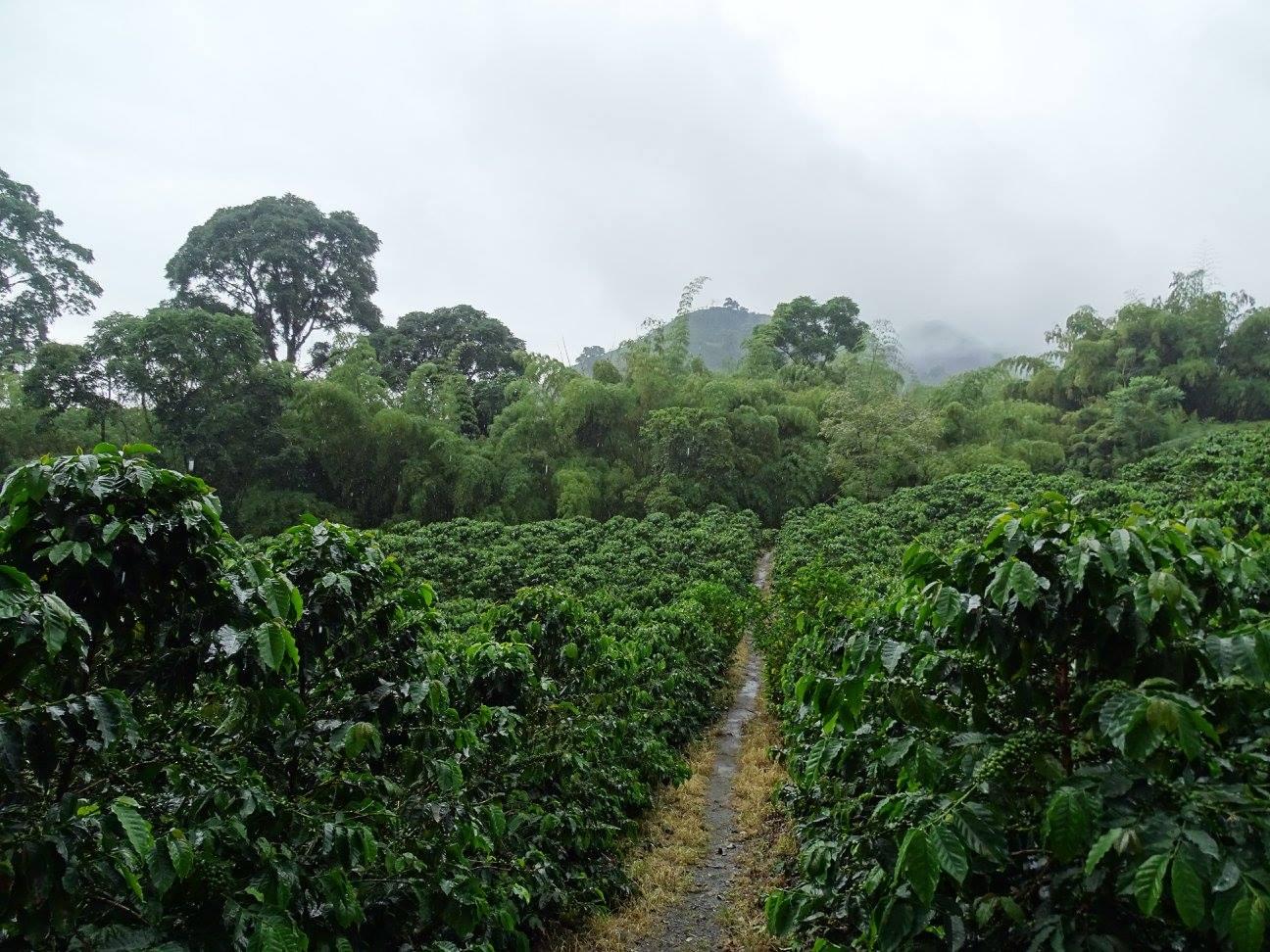 Chinchiná - Hacienda Guayabal