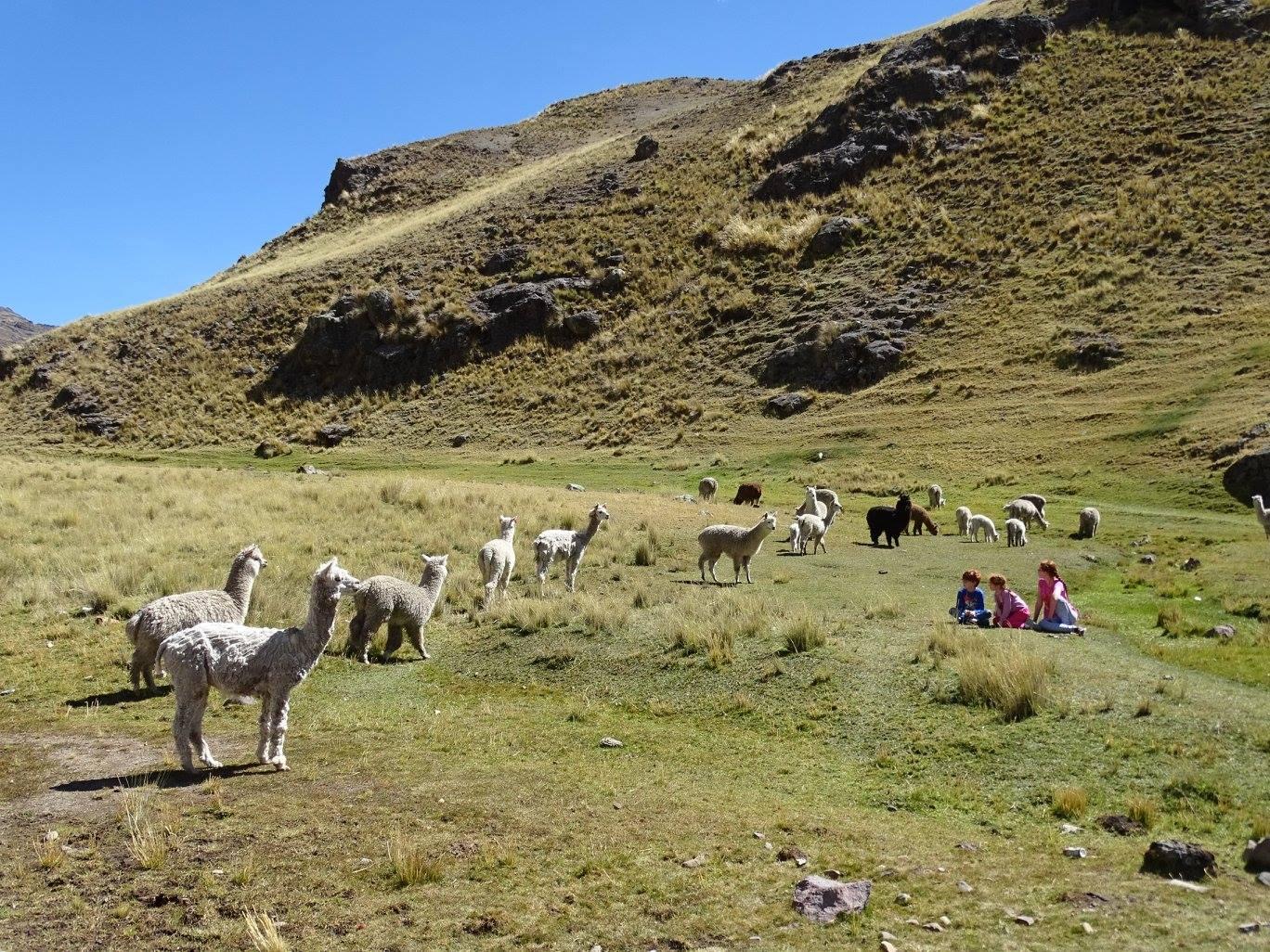 Huancavelica