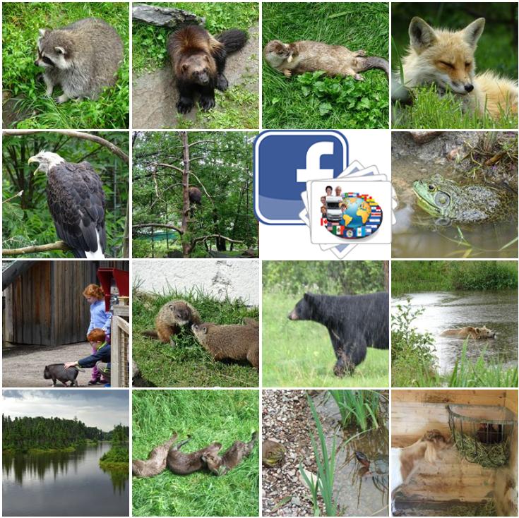 Canada - Zoo de St Félicien